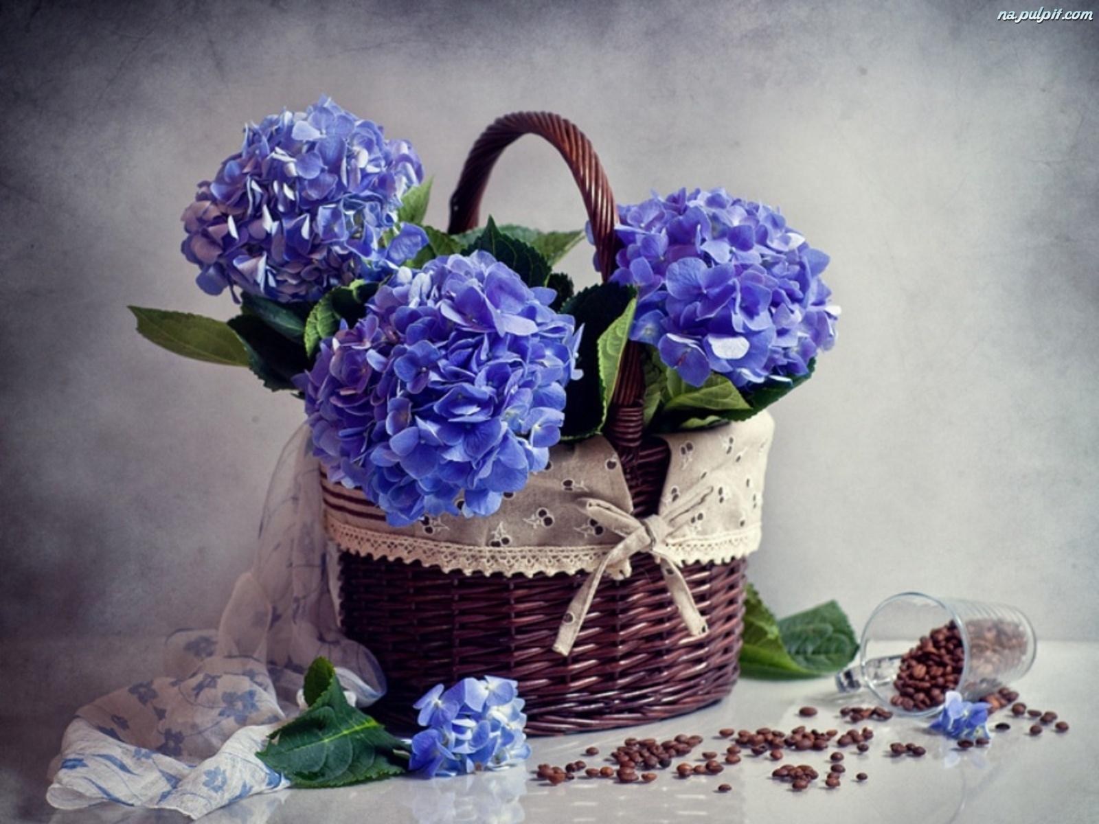 Цветок гортензия картинки 4